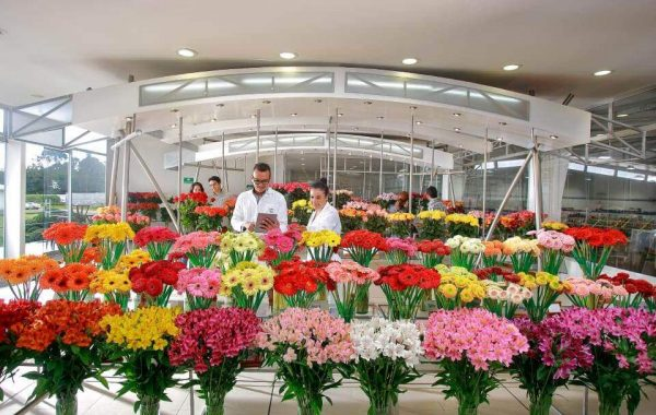 Elite Flower Farmers S.A.S.